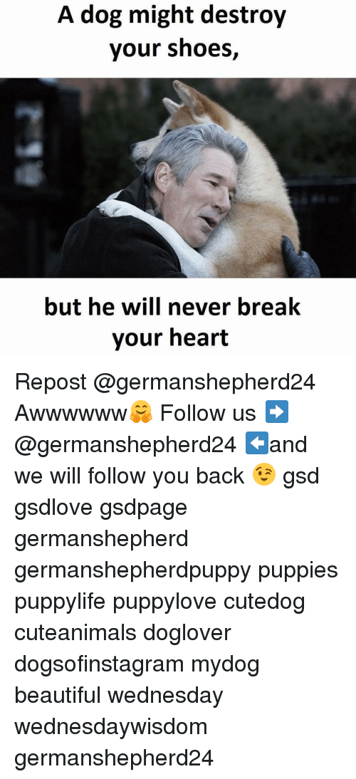 gsd: A dog might destroy  your shoes  but he will never break  your heart Repost @germanshepherd24 ・・・ Awwwwww🤗 Follow us ➡️ @germanshepherd24 ⬅and we will follow you back 😉 gsd gsdlove gsdpage germanshepherd germanshepherdpuppy puppies puppylife puppylove cutedog cuteanimals doglover dogsofinstagram mydog beautiful wednesday wednesdaywisdom germanshepherd24