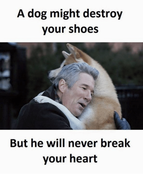 Destroyer, Breaking, and Destroy: A dog might destroy  your shoes  But he will never break  your heart