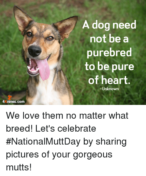 A dog need not be a purebred to be pure of heart unknown for What a dog needs
