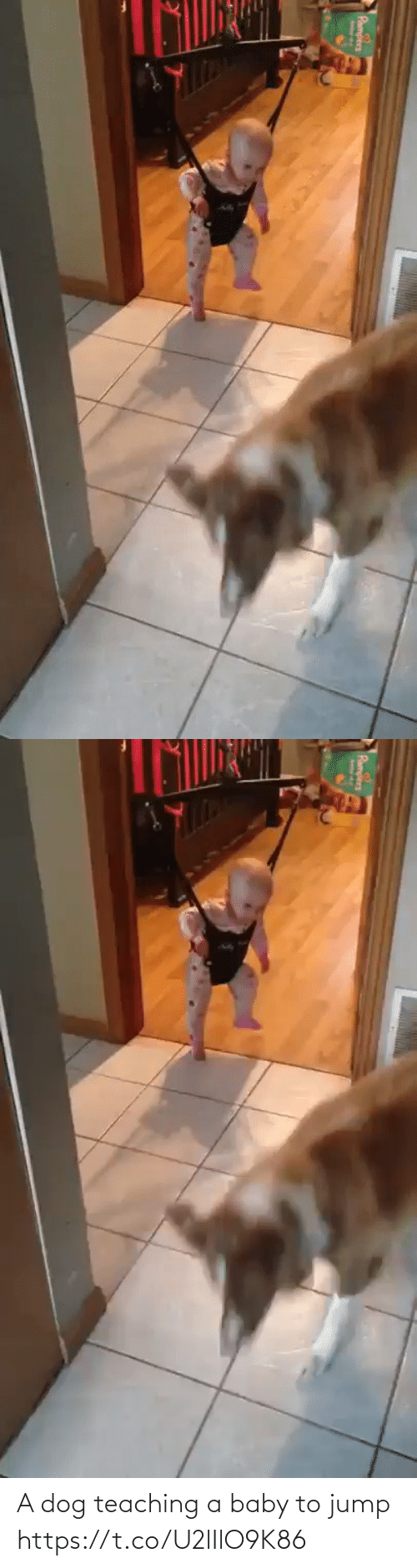 A Dog: A dog teaching a baby to jump https://t.co/U2lIlO9K86