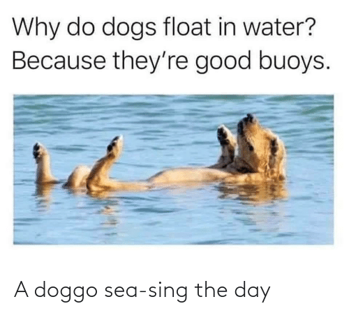 The Day: A doggo sea-sing the day