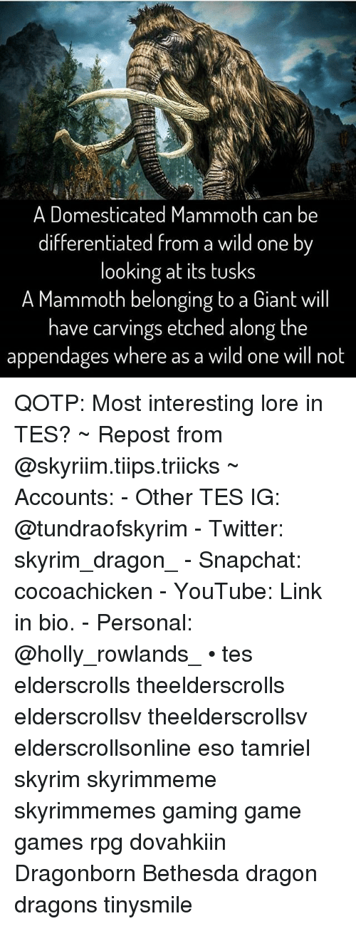 Skyrim, Snapchat, and Twitter: A Domesticated Mammoth can be  differentiated from a wild one by  looking at its tusks  A Mammoth belonging to a Giant will  have carvings etched along the  appendages where as a wild one will not QOTP: Most interesting lore in TES? ~ Repost from @skyriim.tiips.triicks ~ Accounts: - Other TES IG: @tundraofskyrim - Twitter: skyrim_dragon_ - Snapchat: cocoachicken - YouTube: Link in bio. - Personal: @holly_rowlands_ • tes elderscrolls theelderscrolls elderscrollsv theelderscrollsv elderscrollsonline eso tamriel skyrim skyrimmeme skyrimmemes gaming game games rpg dovahkiin Dragonborn Bethesda dragon dragons tinysmile