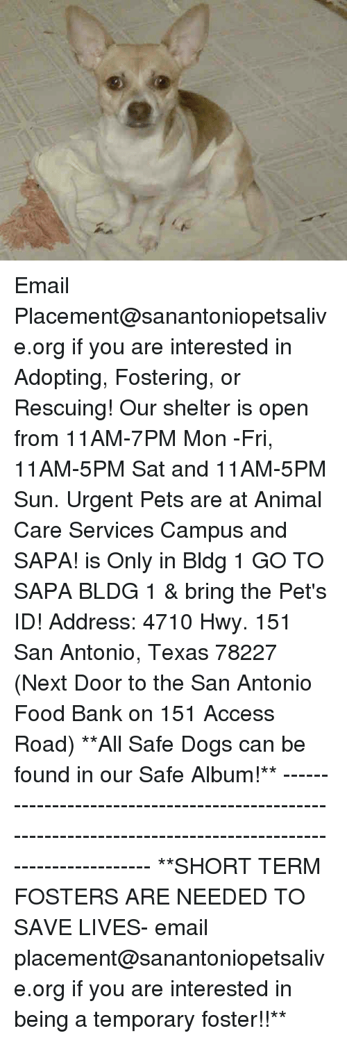 Dogs, Food, and Memes: A Email Placement@sanantoniopetsalive.org if you are interested in Adopting, Fostering, or Rescuing!  Our shelter is open from 11AM-7PM Mon -Fri, 11AM-5PM Sat and 11AM-5PM Sun.  Urgent Pets are at Animal Care Services Campus and SAPA! is Only in Bldg 1 GO TO SAPA BLDG 1 & bring the Pet's ID! Address: 4710 Hwy. 151 San Antonio, Texas 78227 (Next Door to the San Antonio Food Bank on 151 Access Road)  **All Safe Dogs can be found in our Safe Album!** ---------------------------------------------------------------------------------------------------------- **SHORT TERM FOSTERS ARE NEEDED TO SAVE LIVES- email placement@sanantoniopetsalive.org if you are interested in being a temporary foster!!**