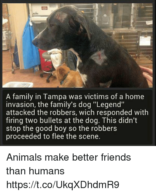 """Friends: A family in Tampa was victims of a home  invasion, the family's dog """"Legend""""  attacked the robbers, wich responded with  firing two bullets at the dog. This didn't  stop the good boy so the robbers  proceeded to flee the scene. Animals make better friends than humans https://t.co/UkqXDhdmR9"""