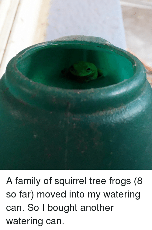 Family, Squirrel, and Tree