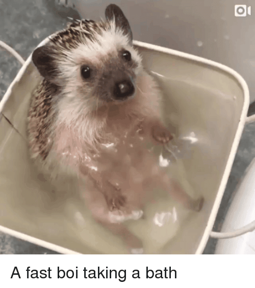 Boi, Fast, and Bath: A fast boi taking a bath