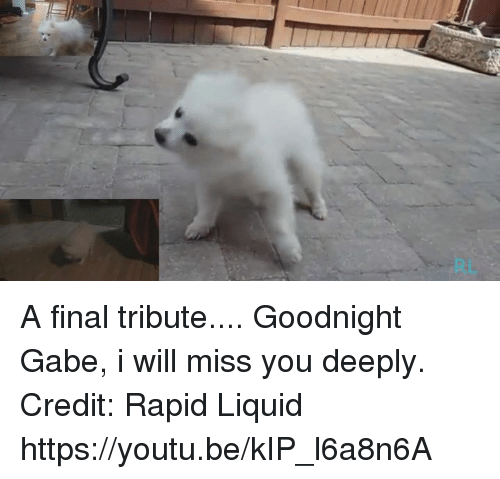 Gabe: A final tribute.... Goodnight Gabe, i will miss you  deeply.  Credit: Rapid Liquid https://youtu.be/kIP_l6a8n6A