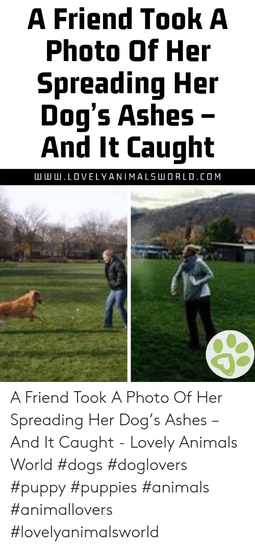ashes: A Friend Took A  Photo Of Her  Spreading Her  Dog's Ashes -  And It Caught  .LOVELYANIMALSLU O R L D . COM A Friend Took A Photo Of Her Spreading Her Dog's Ashes – And It Caught - Lovely Animals World #dogs #doglovers #puppy #puppies #animals #animallovers #lovelyanimalsworld