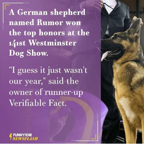 "Dank, German Shepherd, and 🤖: A German shepherd  named Rumor won  the top honors at the  141st Westminster  Dog Show.  ""I guess it just wasn't  our year,"" said the  owner of runner-up  Verifiable Fact.  FUNNY DIE  NEWSFLASH"