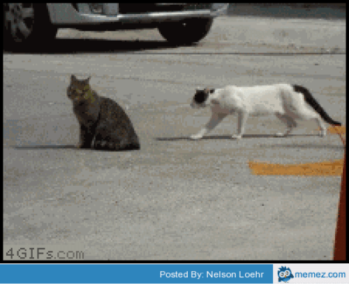 Sneaky Sneaky Meme: A. GIFs com  Posted By: Nelson Loehr  memez.com