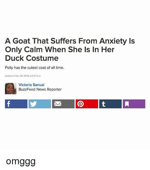 News, Tumblr, and Goat: A Goat That Suffers From Anxiety Is  Only Calm When She Is In Her  Duck Costume  Polly has the cutest coat of all time.  posted on Nov 28, 2016, at 547 am  Victoria Sanusi  BuzzFeed News Reporter omggg