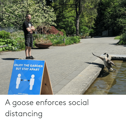 social: A goose enforces social distancing