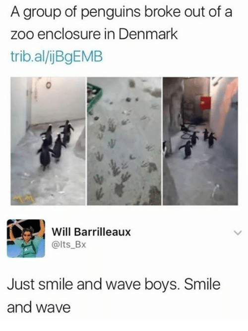 Denmark, Penguins, and Smile: A group of penguins broke out of a  enclosure in Denmark  trib.al/jBgEMB  Will Barrilleaux  @lts_Bx  Just smile and wave boys. Smile  and wave