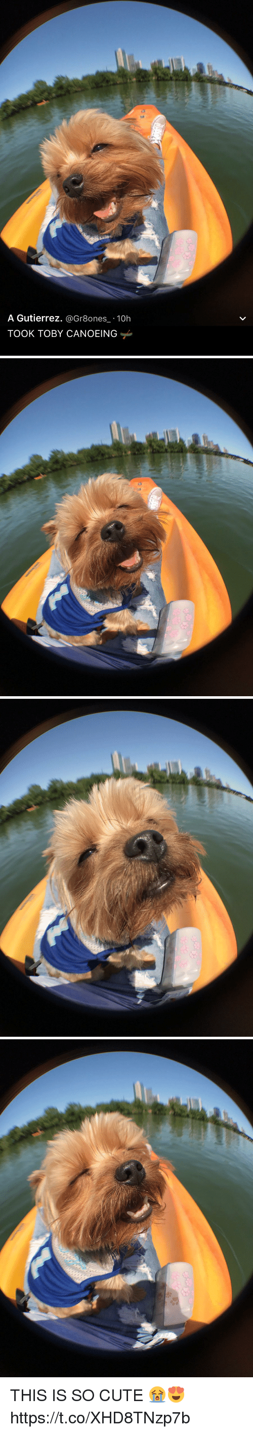 Canoeing: A Gutierrez  @Gr8ones 10h  TOOK TOBY CANOEING   a THIS IS SO CUTE 😭😍 https://t.co/XHD8TNzp7b