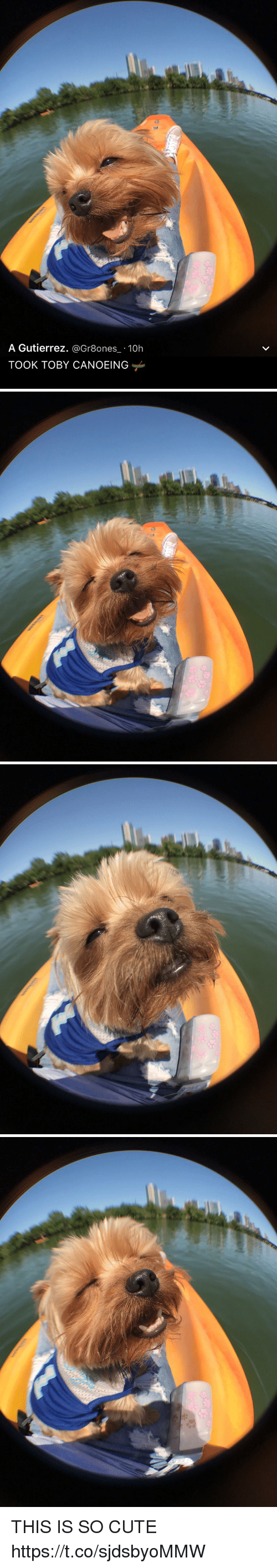 Canoeing: A Gutierrez  @Gr8ones 10h  TOOK TOBY CANOEING THIS IS SO CUTE https://t.co/sjdsbyoMMW