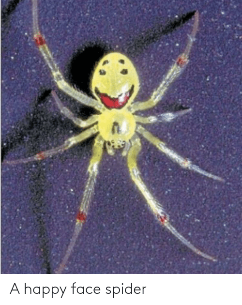 happy face: A happy face spider