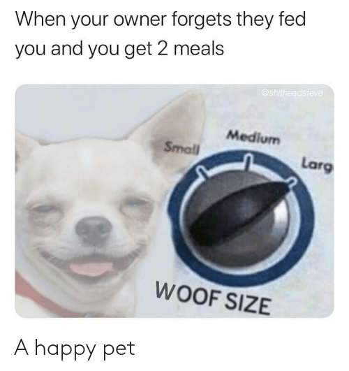 pet: A happy pet