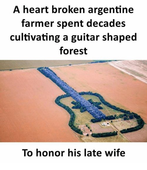 Memes, Guitar, and Heart: A heart broken argentine  farmer spent decades  cultivating a guitar shaped  forest  To honor his late wife