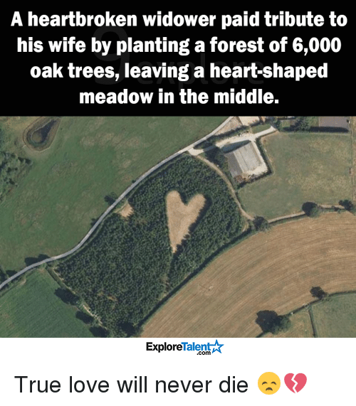 memes: A heartbroken widower paid tribute to  his wife by planting a forest of 6,000  oak trees, leaving a heart-shaped  meadow in the middle.  TalentA  Explore True love will never die 😞💔