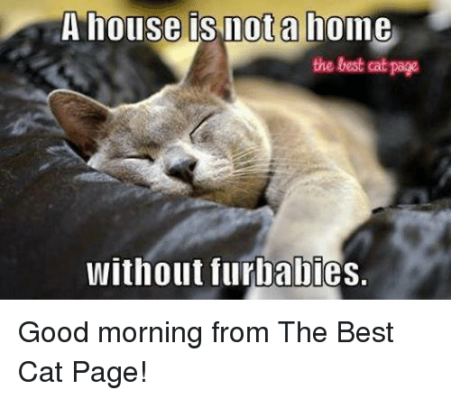 Best Cat: A house is not a home  the best cat page  without furbabies. Good morning from The Best Cat Page!