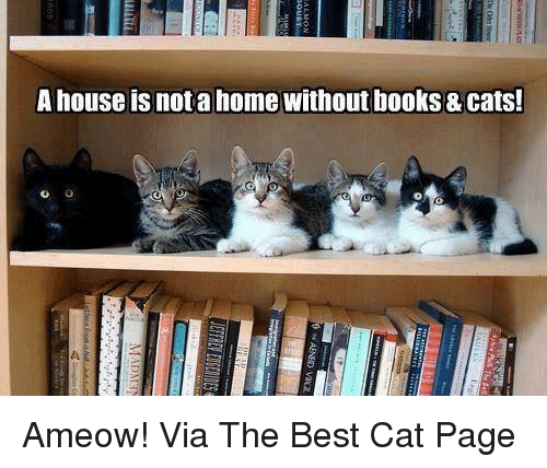 Best Cat: A house isnota home without books & Cats! Ameow! Via The Best Cat Page