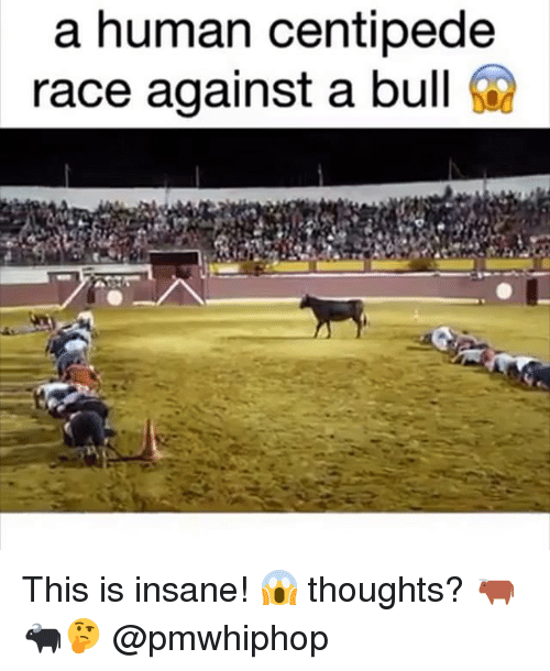 bulling: a human centipede  race against a bull This is insane! 😱 thoughts? 🐂🐃🤔 @pmwhiphop