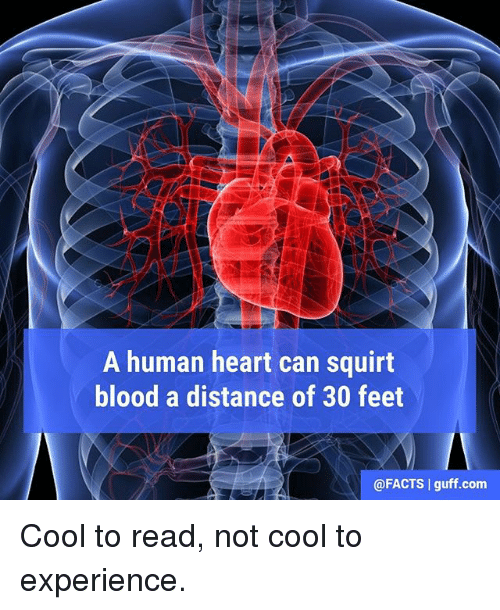 Squirtly: A human heart can squirt  blood a distance of 30 feet  @FACTS I guff .com Cool to read, not cool to experience.