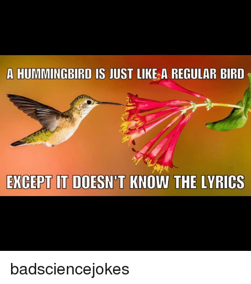 Hummingbird: A HUMMINGBIRD IS JUST LIKE A REGULAR BIRD  EXCEPT IT DOESN'T KNOW THE LYRICS badsciencejokes