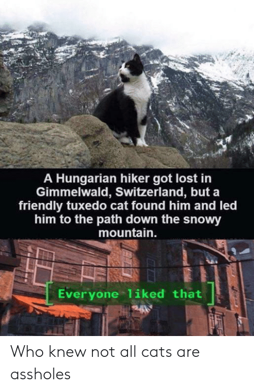 Cats Are Assholes: A Hungarian hiker got lost in  Gimmelwald, Switzerland, but a  friendly tuxedo cat found him and led  him to the path down the snowy  mountain.  Everyone 1iked that Who knew not all cats are assholes