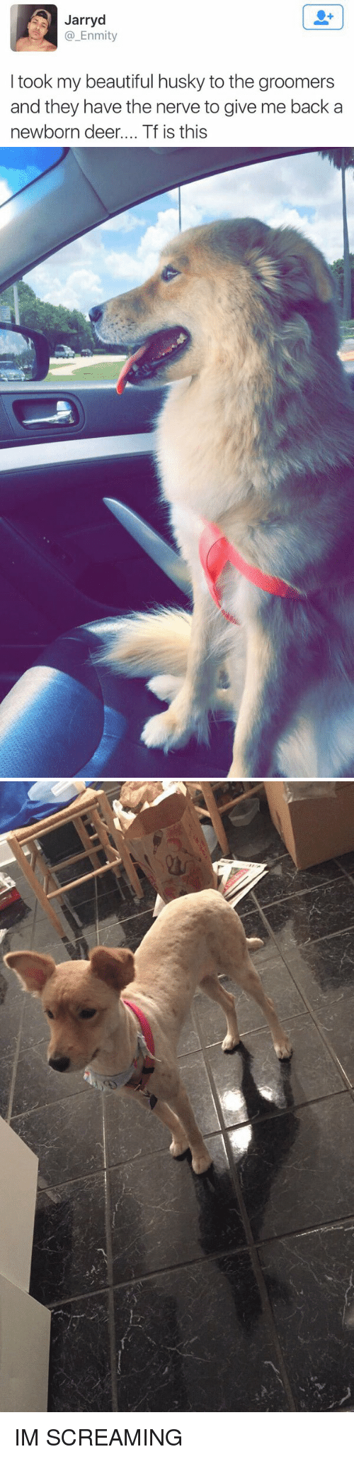 Groomers: A Jarryd  Enmity  I took my beautiful husky to the groomers  and they have the nerve to give me back a  newborn deer.... Tf is this IM SCREAMING