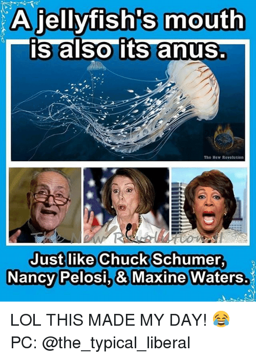 Chucks: A jellyfish's mouth  is also its anus  The Mew Revolution  Just like Chuck Schumer  Nancy  Pelosi.& Maxine Waters. LOL THIS MADE MY DAY! 😂 PC: @the_typical_liberal