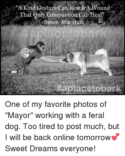 "Memes, Compassion, and 🤖: ""A Kind Gesture Can Reach A Wound  That Only Compassion Can Heal''  Steve Marabol One of my favorite photos of ""Mayor"" working with a feral dog. Too tired to post much, but I will be back online tomorrow💕 Sweet Dreams everyone!"