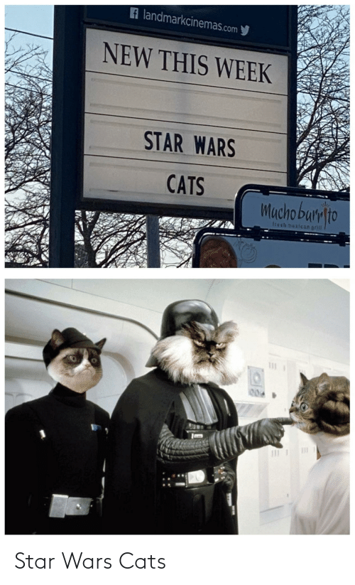 mucho: A landmarkcinemas.com y  NEW THIS WEEK  STAR WARS  CATS  Mucho bumlto  trech mexican grill  004 Star Wars Cats