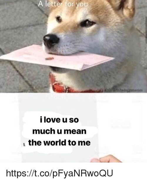 Love, Memes, and Mean: A  letter  for  you  Intinitedoggomemes  05  i love u so  much u mean  the world to me https://t.co/pFyaNRwoQU
