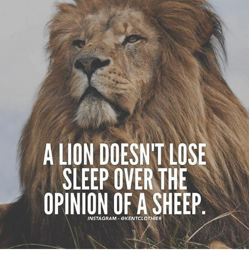 Lion Sheep Quote: ️ 25+ Best Memes About A Lion Doesnt Lose Sleep