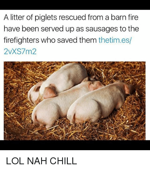 Nah Chill: A litter of piglets rescued from a barn fire  have been served up as sausages to thee  firefighters who saved them thetim.es/  2vXS7m2 LOL NAH CHILL