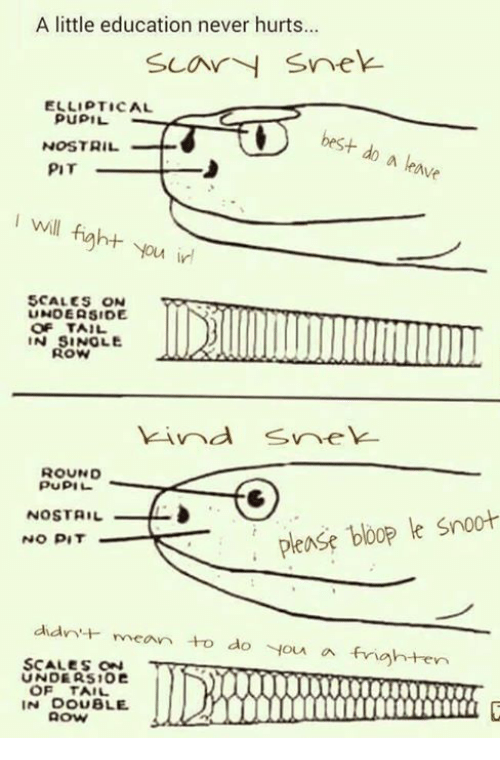Dank, Frightening, and 🤖: A little education never hurts...  Car snek  ELLIPTICAL  PUPIL  best do a ave  NOSTRIL  PIT  will fight you in  SCALES ON  UNOEASIDE  OF TAIL  IN SINgLE  ROUND  PUPIL  Please bloop le Snoot  NOSTAIL  NO PIT  didn'  rvean to do you a frighten  SCALES ON  UNDE AS102  OF TAIL  IN OOUBLE.  AOW