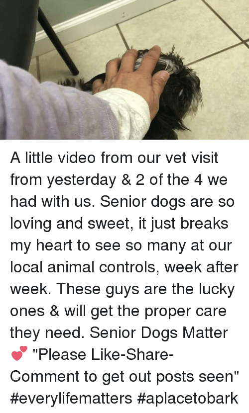 "Animals, Memes, and Control: A little video from our vet visit from yesterday & 2 of the 4 we had with us.  Senior dogs are so loving and sweet, it just breaks my heart to see so many at our local animal controls, week after week.   These guys are the lucky ones & will get the proper care they need. Senior Dogs Matter💕  ""Please Like-Share-Comment to get out posts seen"" #everylifematters #aplacetobark"
