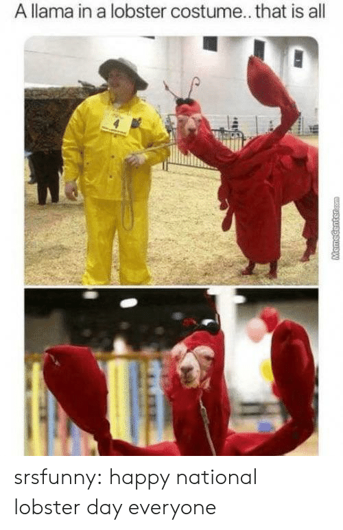 llama: A llama in a lobster costume... that is all  MHR  MemeCentercom srsfunny:  happy national lobster day everyone