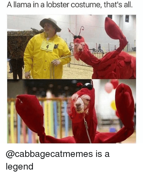 25 Best Memes About Costume Costume Memes