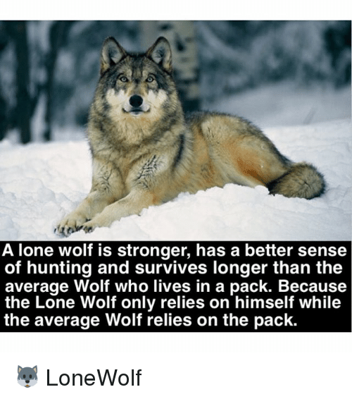 lone wolf: A lone wolf is stronger, has a better sense  of hunting and survives longer than the  average Wolf who lives in a pack. Because  the Lone Wolf only relies on himself while  the average Wolf relies on the pack. 🐺 LoneWolf