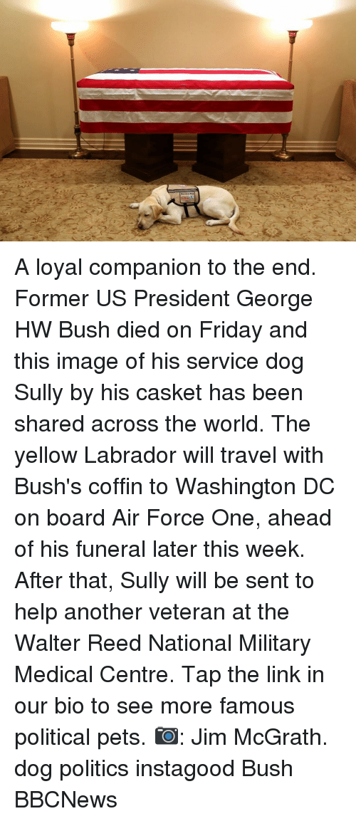 Reed: A loyal companion to the end. Former US President George HW Bush died on Friday and this image of his service dog Sully by his casket has been shared across the world. The yellow Labrador will travel with Bush's coffin to Washington DC on board Air Force One, ahead of his funeral later this week. After that, Sully will be sent to help another veteran at the Walter Reed National Military Medical Centre. Tap the link in our bio to see more famous political pets. 📷: Jim McGrath. dog politics instagood Bush BBCNews