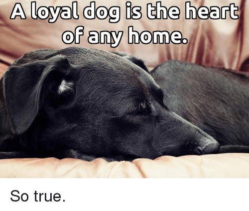 Memes, 🤖, and The Heart: A loyal dog is the heart  of any home. So true.