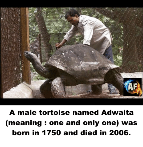 Memes, Meaning, and Only One: A male tortoise named Adwaita  (meaning one and only one) was  born in 1750 and died in 2006.
