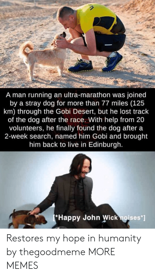 marathon: A man running an ultra-marathon was joined  by a stray dog for more than 77 miles (125  km) through the Gobi Desert, but he lost track  of the dog after the race. With help from 20  volunteers, he finally found the dog after a  2-week search, named him Gobi and brought  him back to live in Edinburgh.  Happy John Wick noises' Restores my hope in humanity by thegoodmeme MORE MEMES