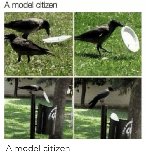 citizen: A model citizen