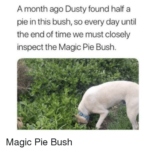 Inspect: A month ago Dusty found half a  pie in this bush, so every day until  the end of time we must closely  inspect the Magic Pie Bush. Magic Pie Bush