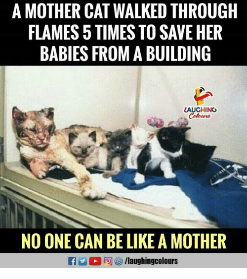 Be Like, Indianpeoplefacebook, and Her: A MOTHER CAT WALKED THROUGH  FLAMES 5 TIMES TO SAVE HER  BABIES FROM A BUILDING  LAUGHING  NO ONE CAN BE LIKE A MOTHER