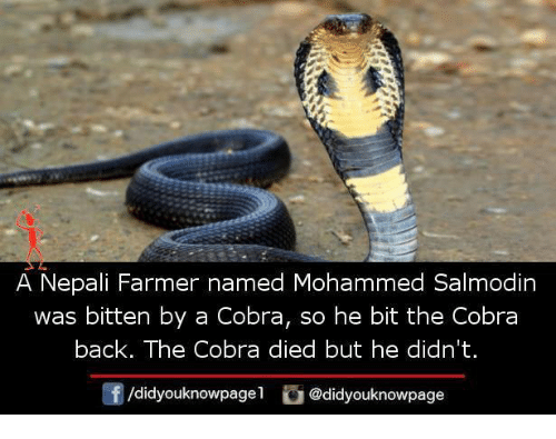 nepali: A Nepali Farmer named Mohammed Salmodin  was bitten by a Cobra, so he bit the Cobra  back. The Cobra died but he didn't.  @didyouknowpage
