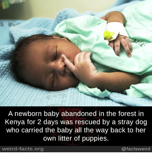 Facts, Memes, and Puppies: A newborn baby abandoned in the forest in  Kenya for 2 days was rescued by a stray dog  who carried the baby all the way back to her  own litter of puppies.  weird-facts.org  @facts weird